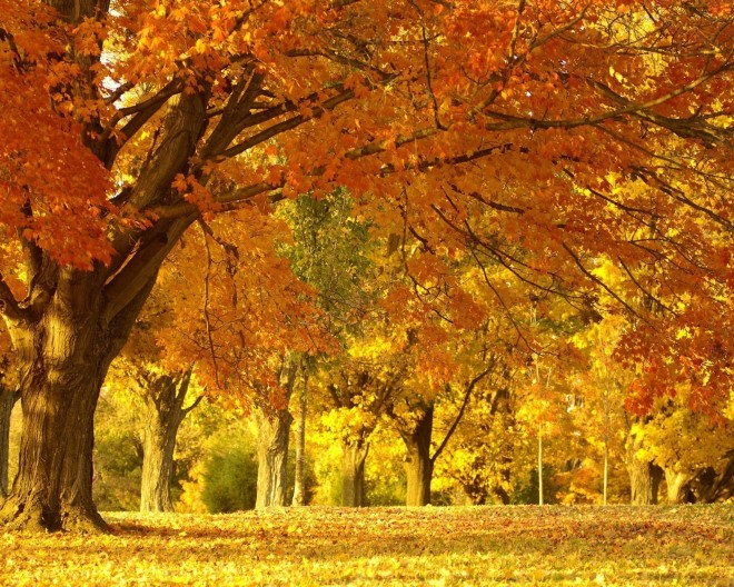 6976215-autumn-leaves-wallpaper
